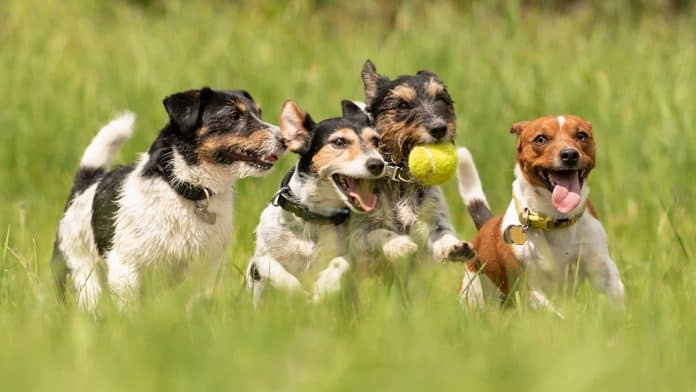 Best Dog Parks and Runs in Singapore