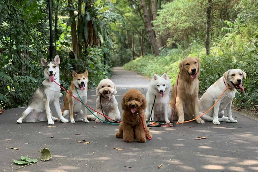 Dogs sitting on a garden trail posing for a photo