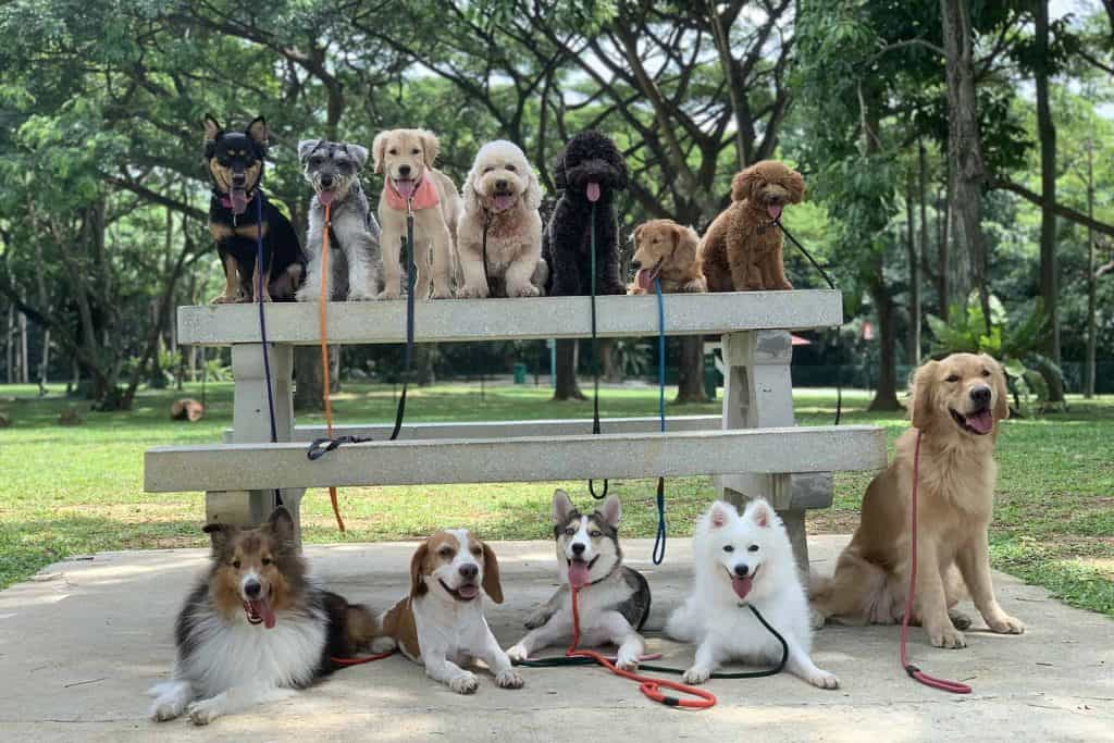 Dogs sitting on a park bench posing for a photo
