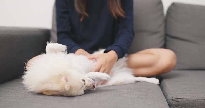 Checking your dog's armpits and groin