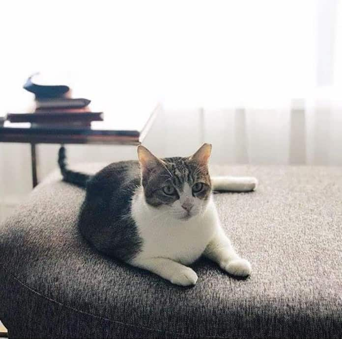 Cat lying down on a couch at Four Seasons Singapore
