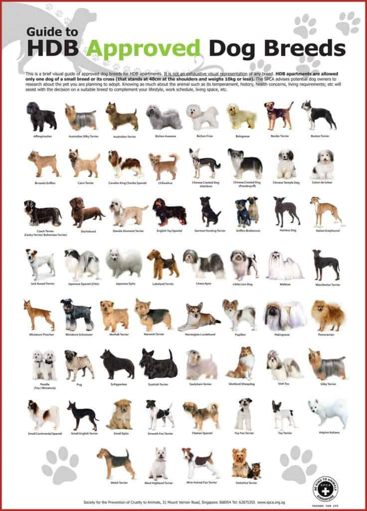 HDB approved dog breeds