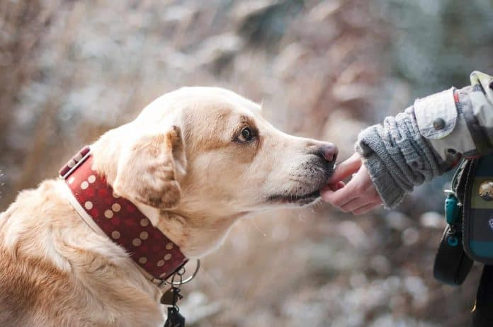 Dog placing mouth of person's hand