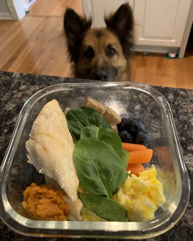 Dog looking at a bowl of chicken salad