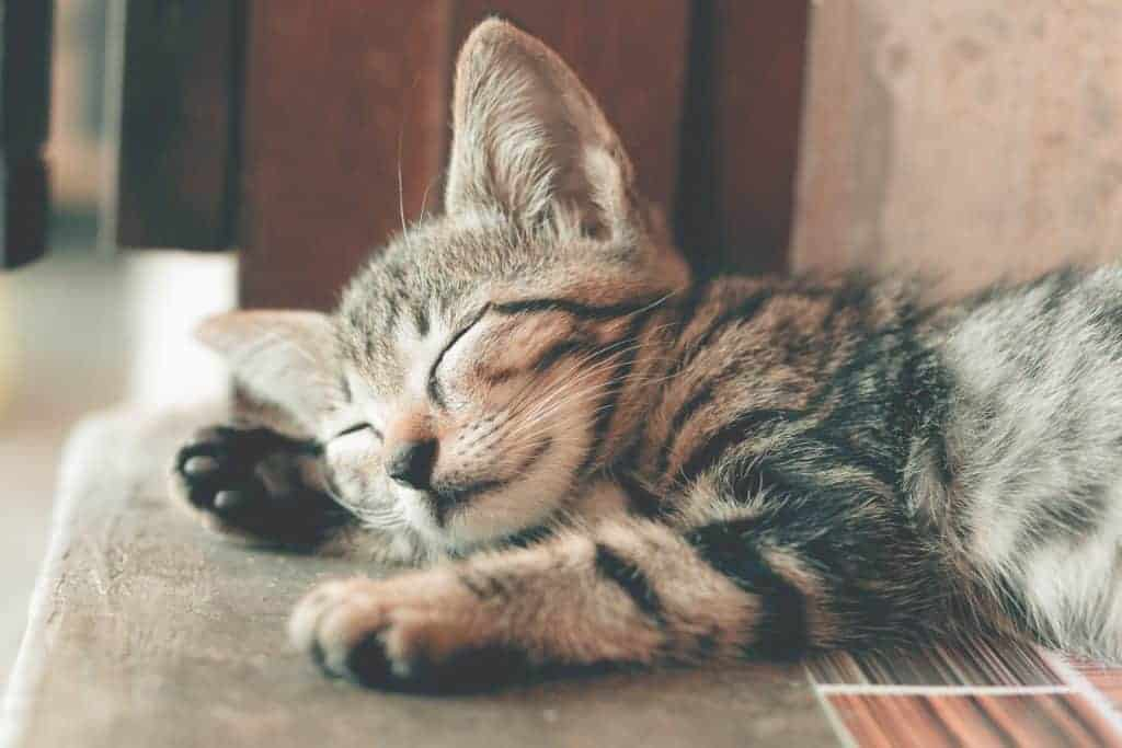 Cat lying on its paw with eyes closed