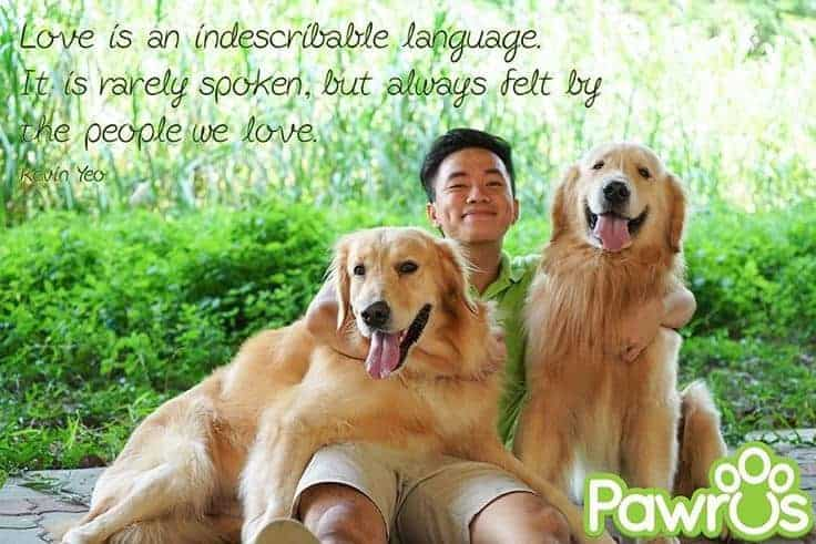 Man in green with two golden retrievers and a quote about love by Kevin Yeo