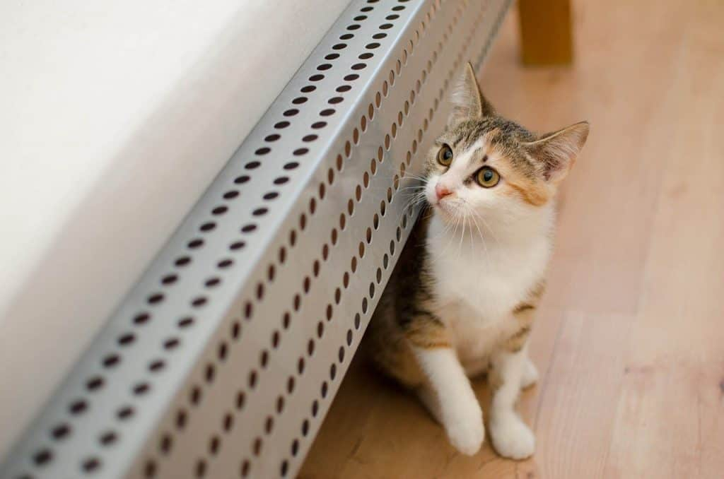 Cat lying under a bed frame