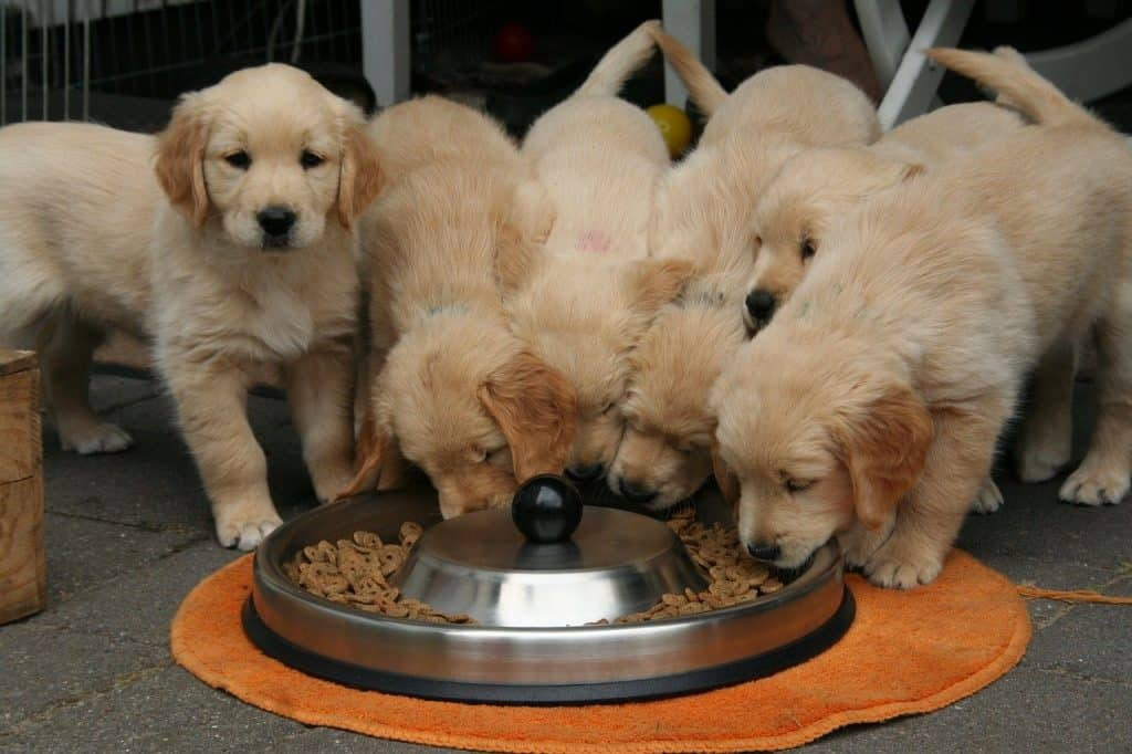 Puppies eating from a food bowl
