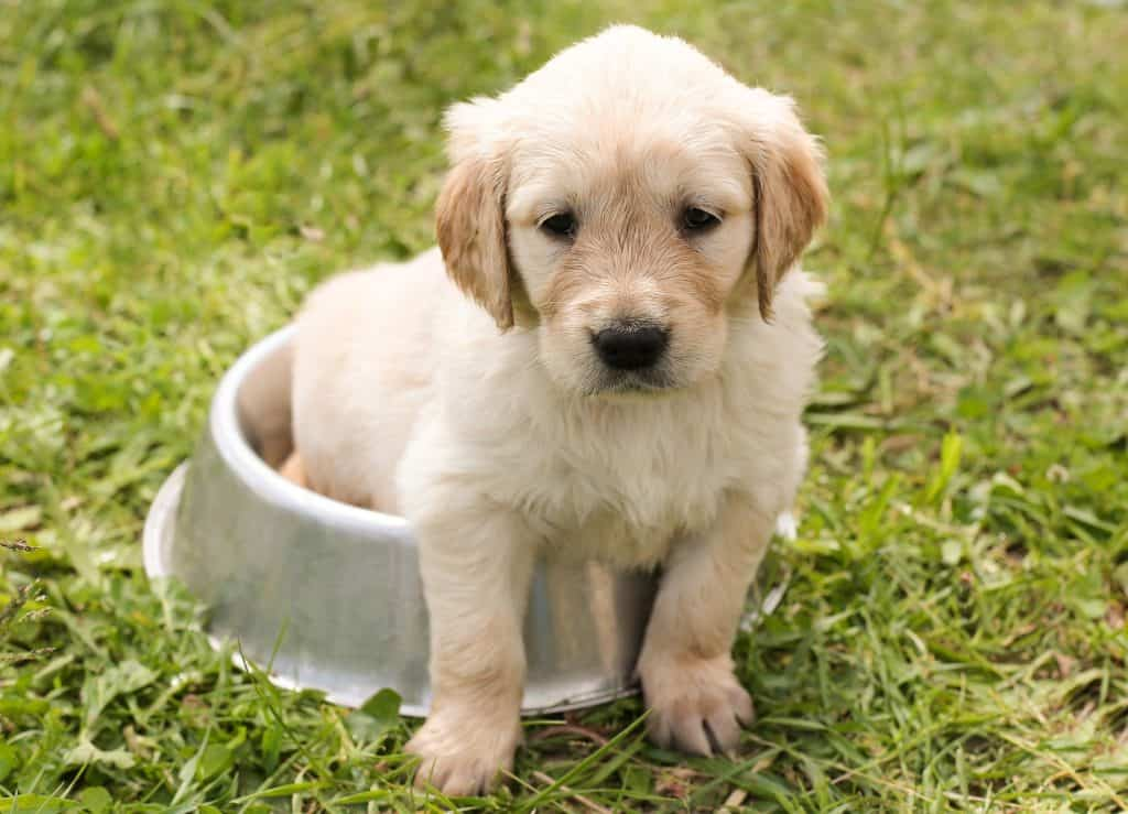 Puppy sitting inside a water bowl placed on the grass