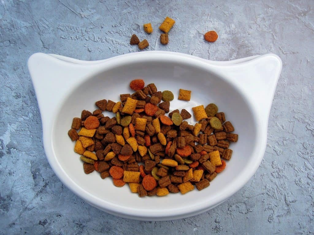 Cat food in white cat-shaped bowl