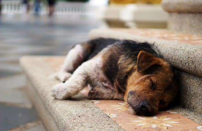 a dog lying in the streets