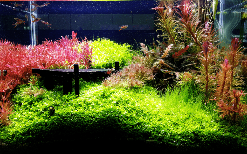 Fish tank filled with aquatic plants