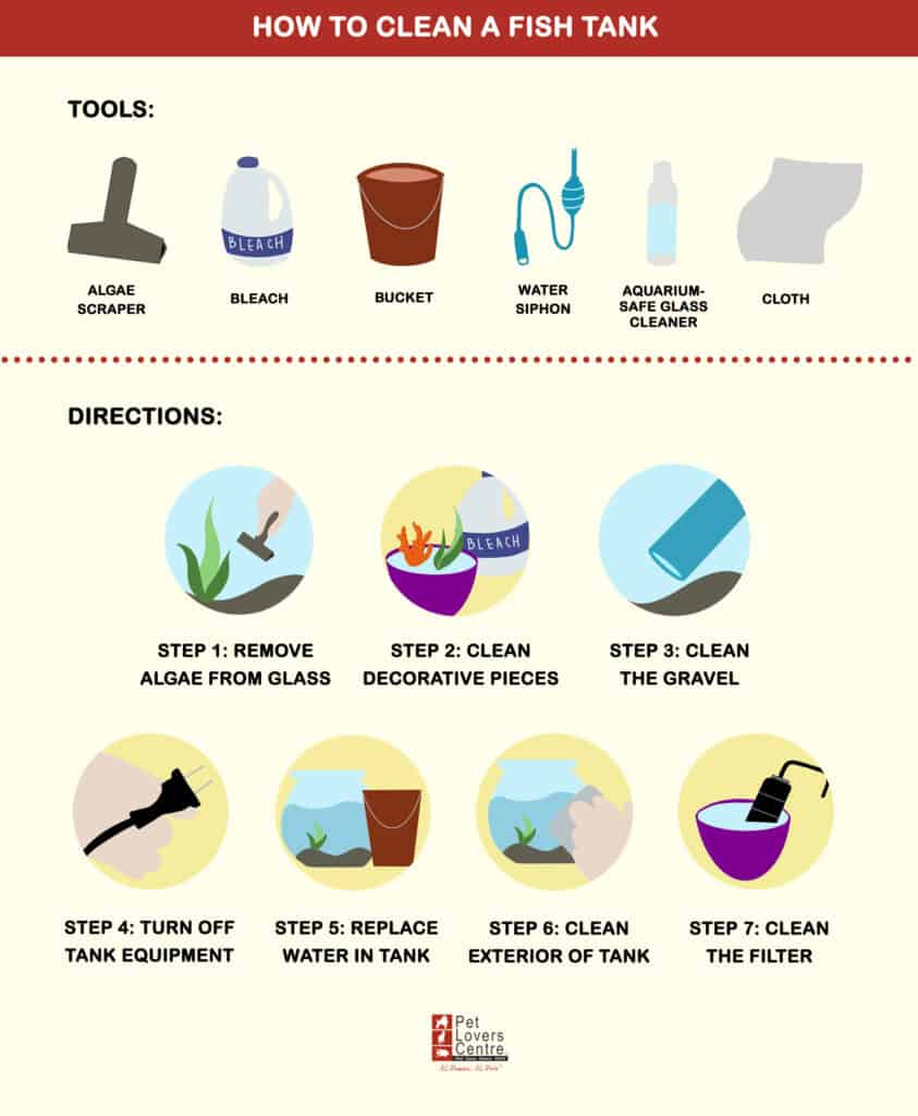 How to Clean a Fish Tank (Steps)