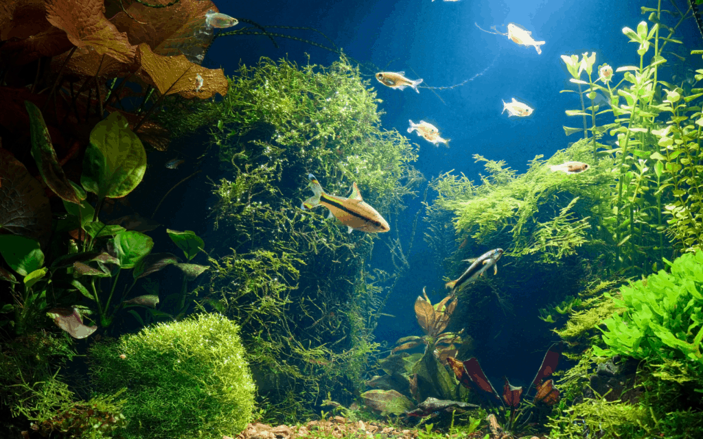 Fish tank with fishes and live plants