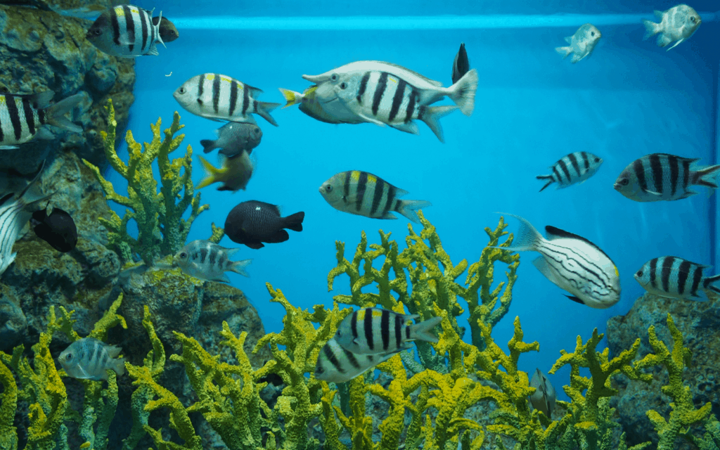 Fish tank with a variety of fishes and live plants