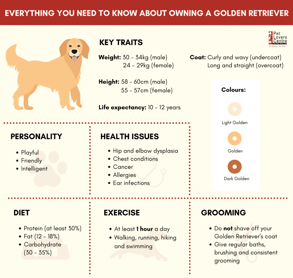 everything you need to know about owning a golden retriever infographic