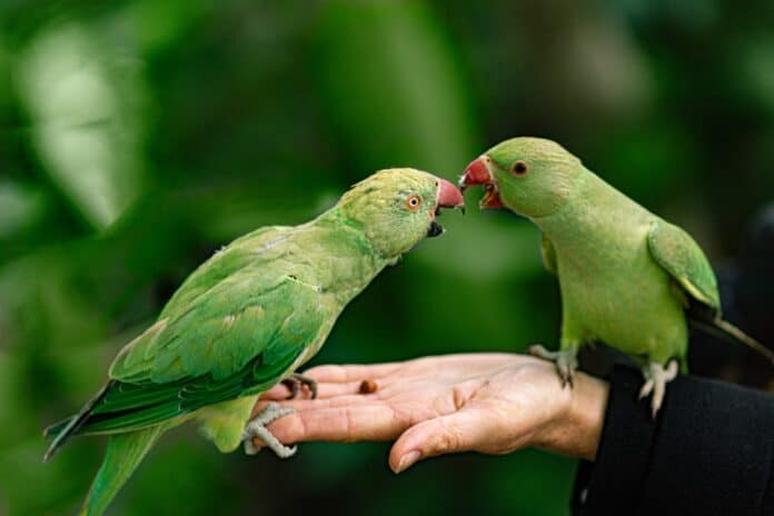 two parrots on a hand