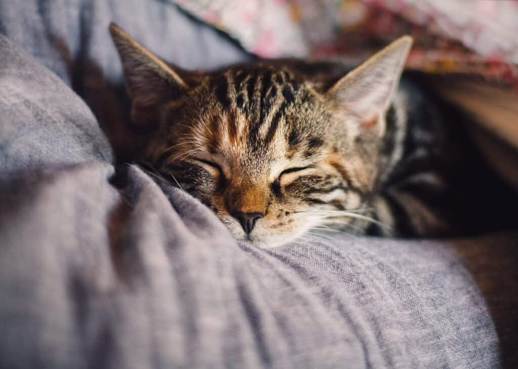 cat sleeping on a pillow
