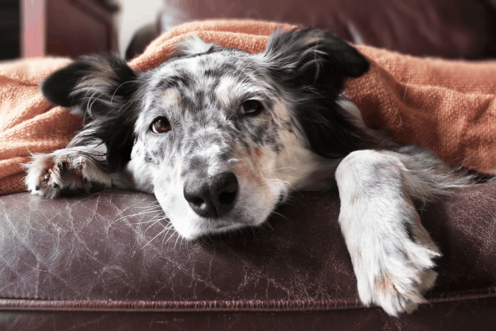 dog resting on a couch