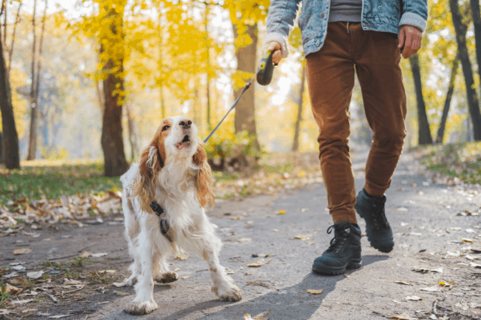 Dog walking with owner on a leash