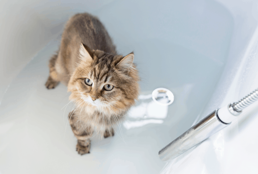 Cat standing in bathtub with water