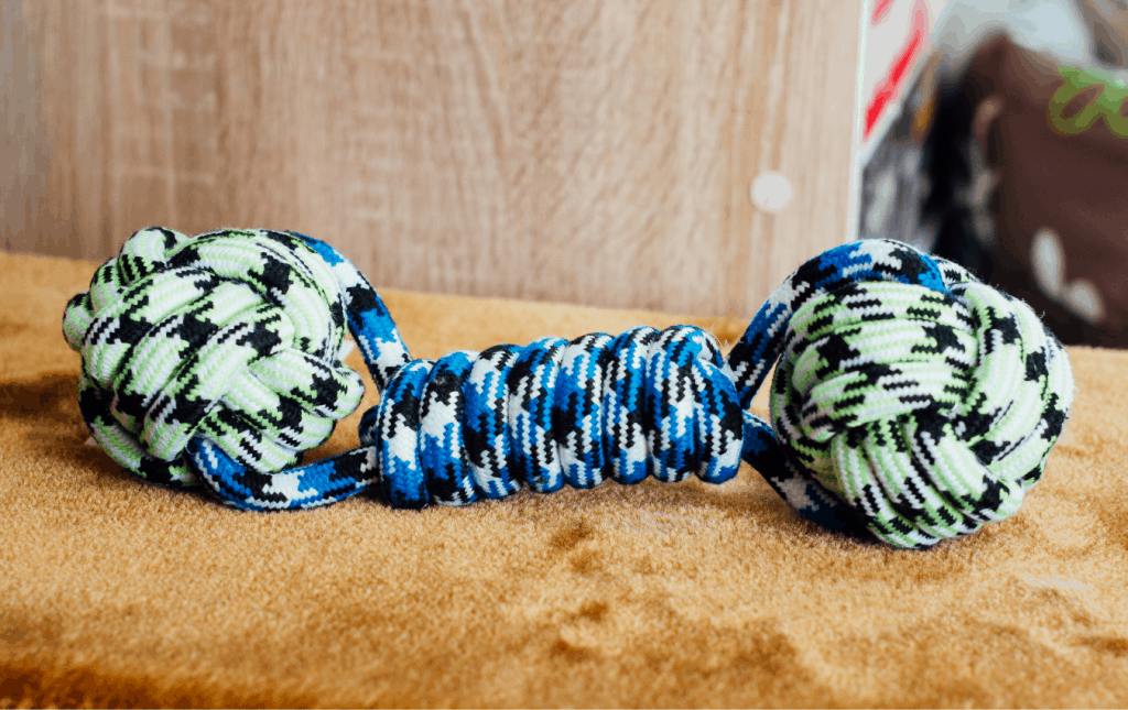 Blue and green chew toy for dogs