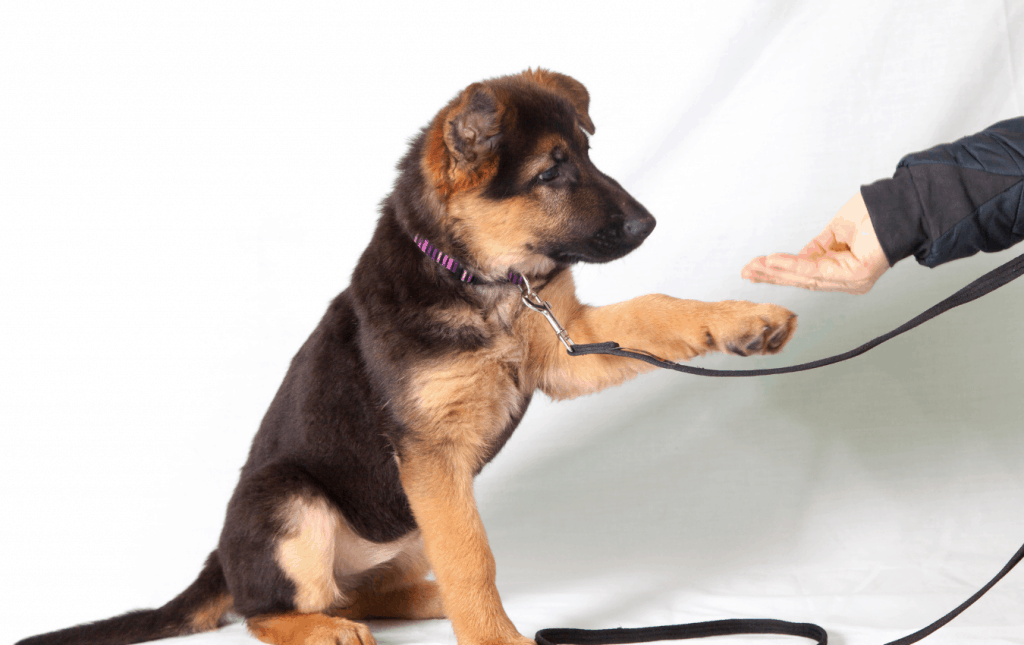 Puppy stretching out paw to owner