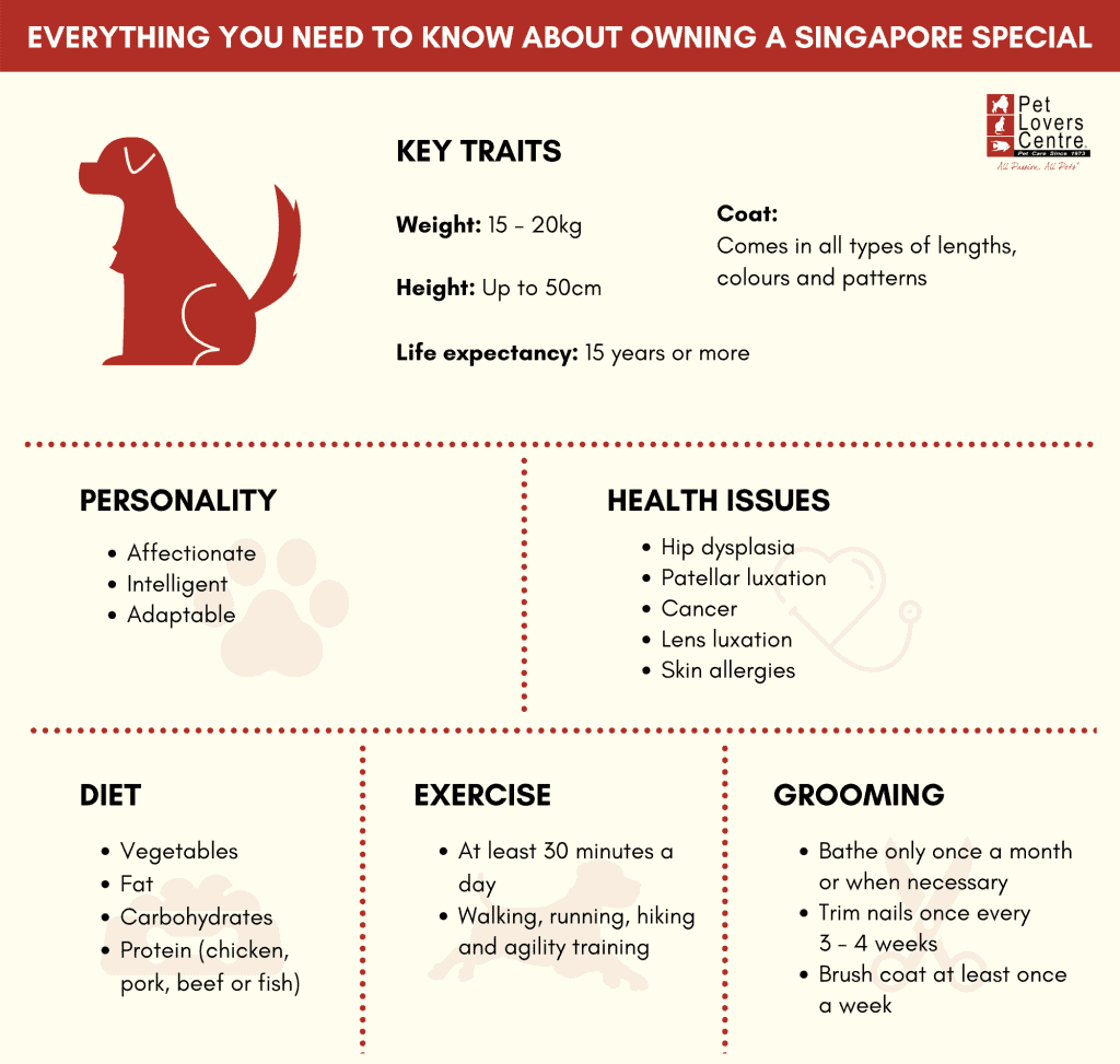 infographic for Singapore Special