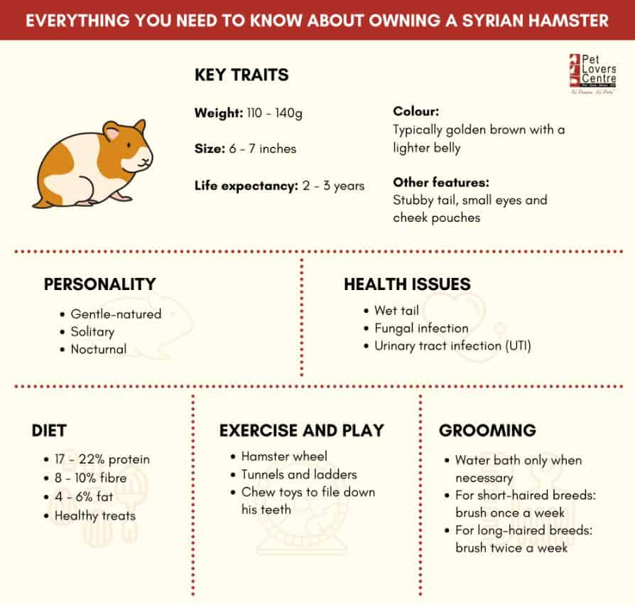 Infographic on Syrian Hamster