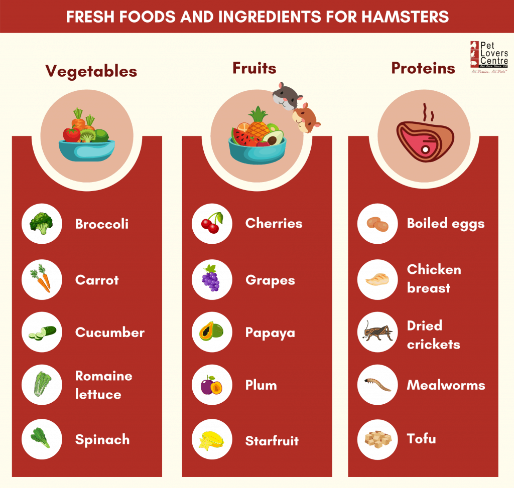 summary infographic on the vegetables, fruits and proteins hamsters can eat