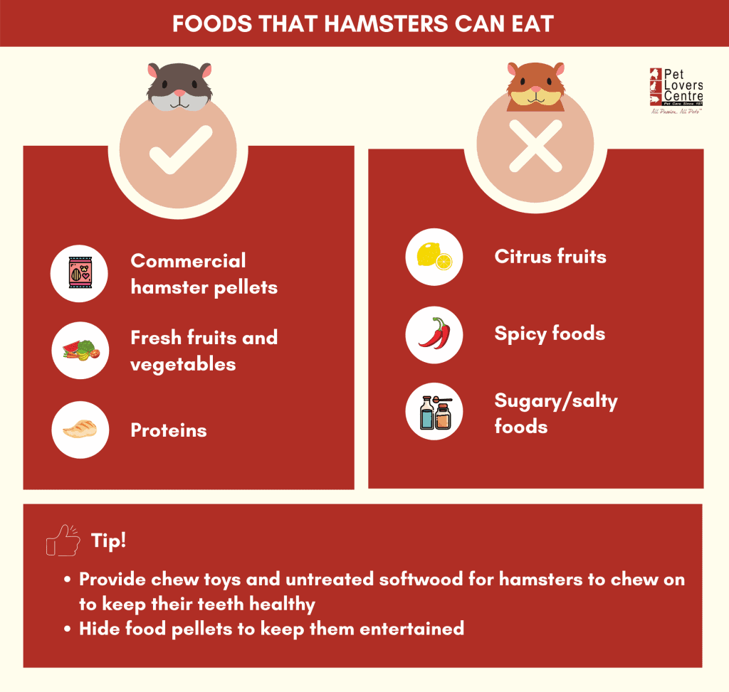 summary infographic on the food hamsters can eat