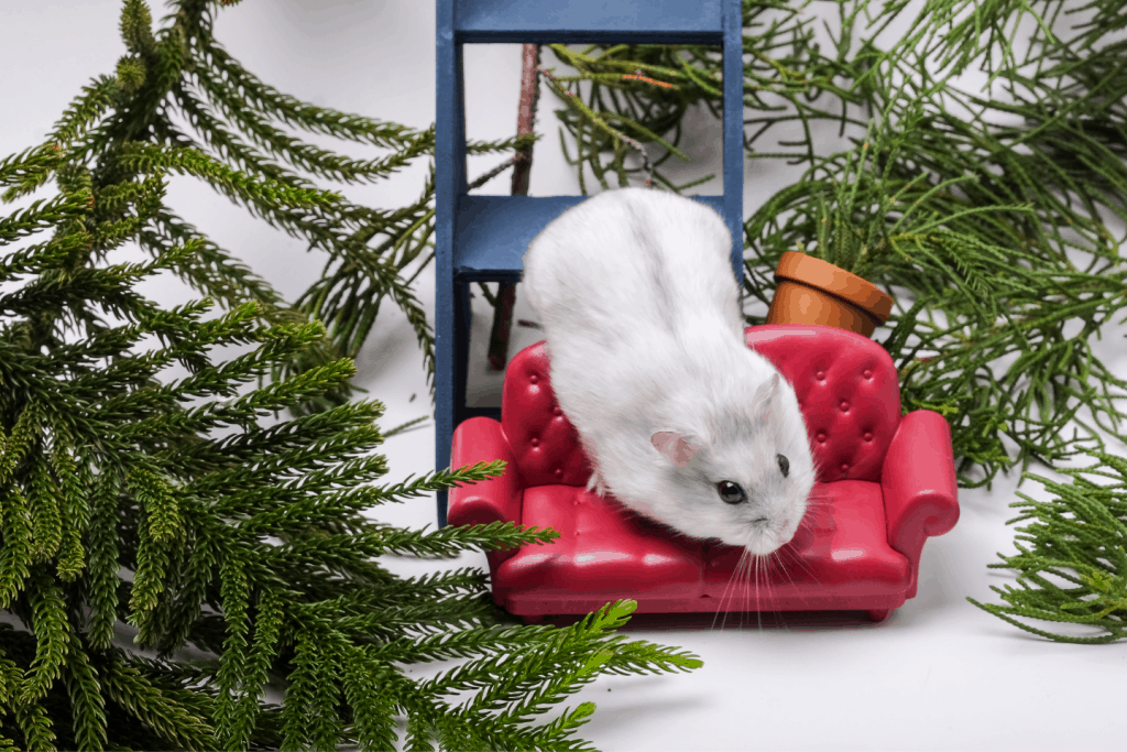 Winter white hamster on a mini chair