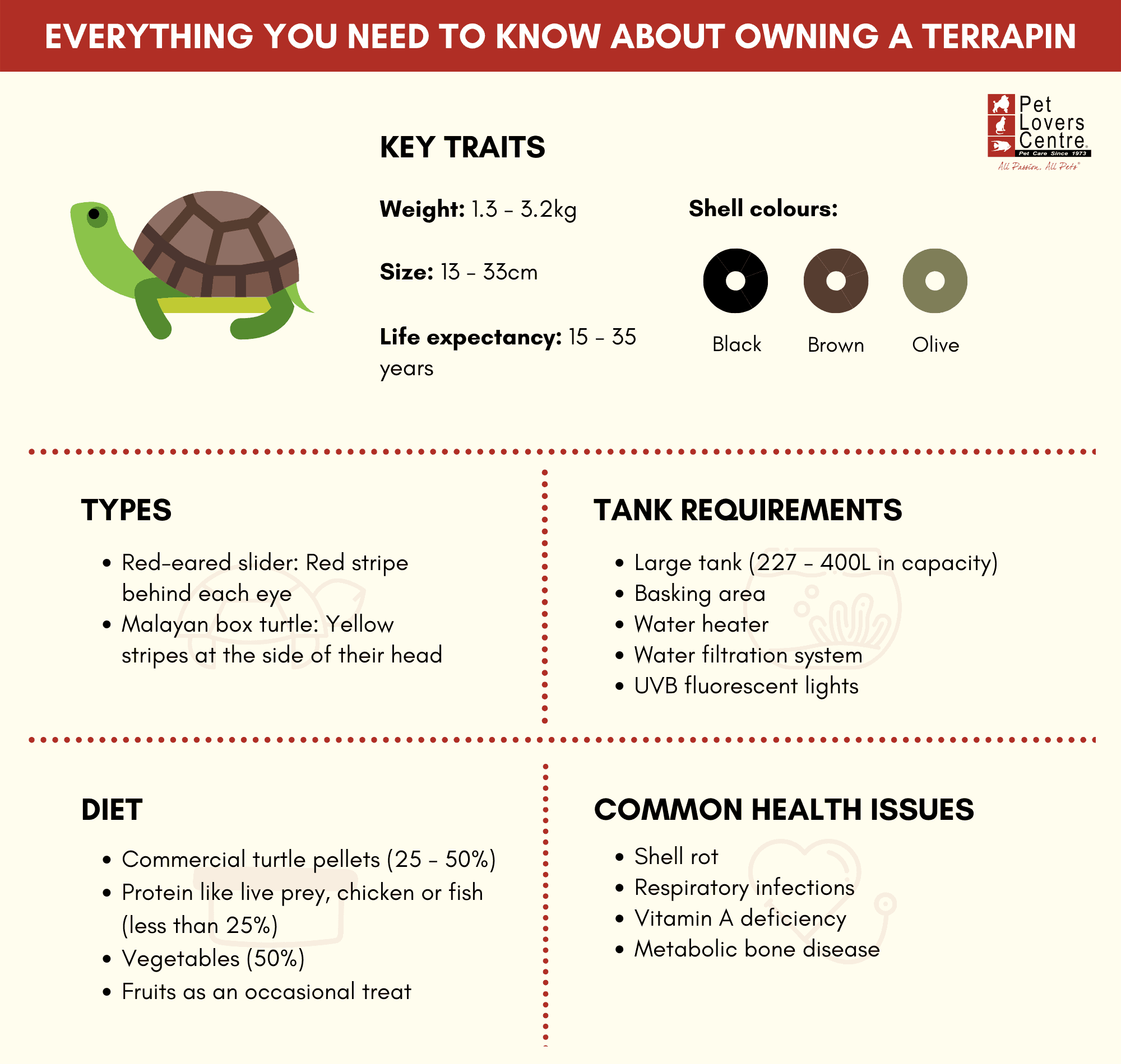 Infographic about caring for a terrapin in SIngapore