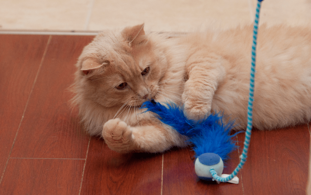 Cat playing with interactive toy