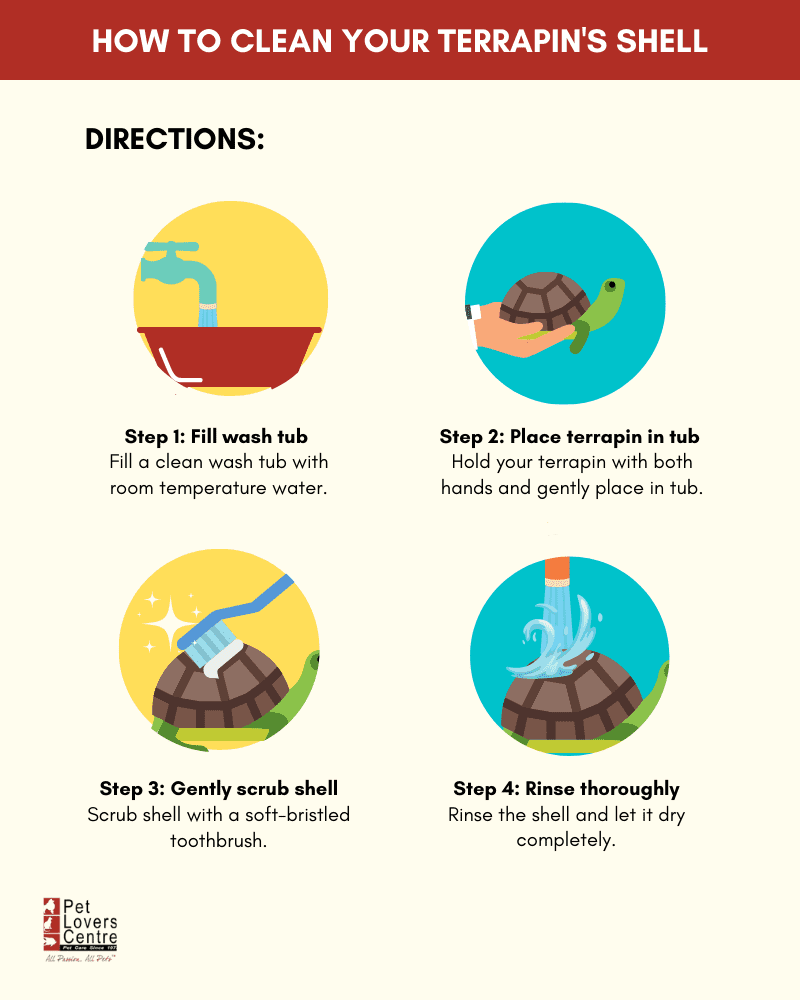 Infographic on how to clean your terrapin's shell