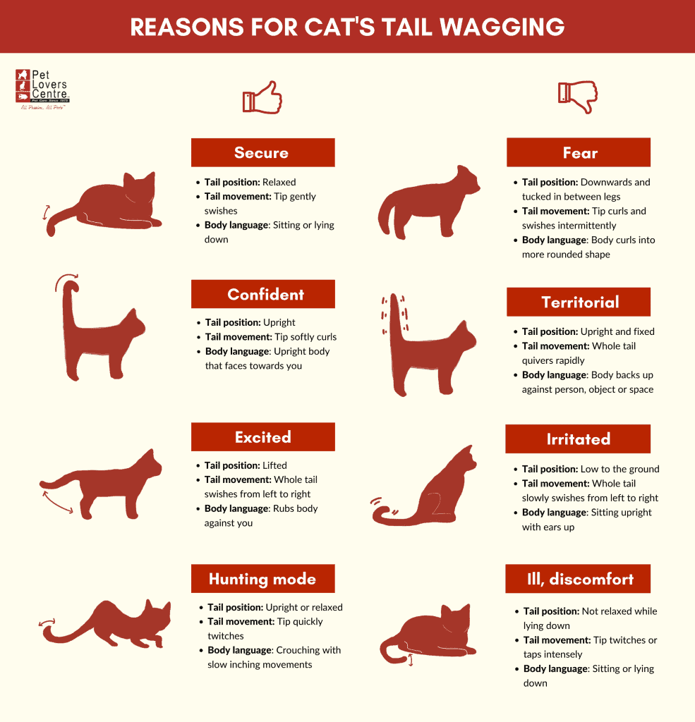 Why do cats wag their tail infographic