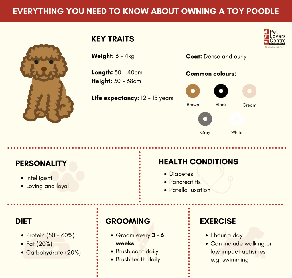 Infographic - Everything you need to know about owning a toy poodle in Singapore